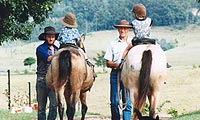 tamborine accommodation and horse riding on the mountain