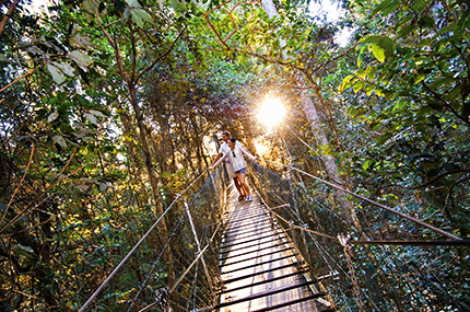 Tamborine Rainforest Skywalk Attraction Bushwalks